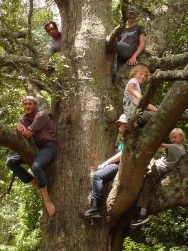 TreeScouts